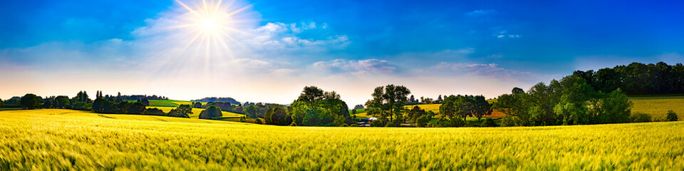 Wall Murals Melon Panorama of a landscape with fields, meadows, trees and sun