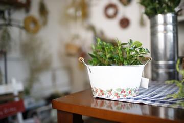 テーブルに置いてある観葉植物
