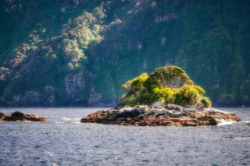 A small rocky island at Doubtful Sound