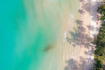 Aerial photo nature landscape of idyllic white sand beach with coconut tree
