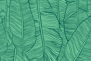 Vector texture with banana leaves. Hand drawn tropical foliage. Exotic green background.
