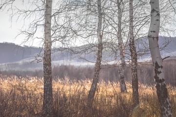 winter, forest, snow, tree, landscape, nature, trees, cold, frost, sky, woods, fog, autumn, season, white, ice, blue, wood, frozen, birch, park, light, mist, fall, river
