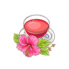 hibiscus tea illustration
