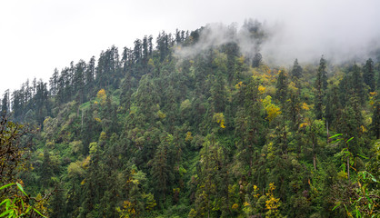 Mountain and forest scenery in Nepal