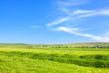 In de dag Lime groen green plain in summer
