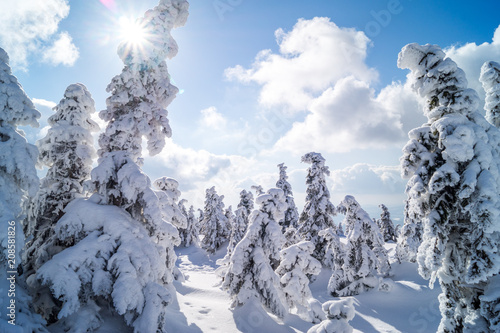 Sonnige Schneelandschaft Stock Photo And Royalty Free Images On