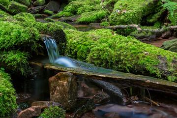 kleiner Bach im Wald fließt durch Steine mit Moos
