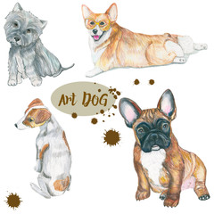 Dogs of different breeds.  Hand painting . color pencil. For veterinary use, postcards and fabric prints.