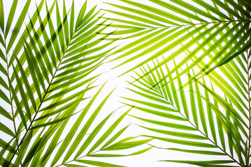 Keuken foto achterwand Tropische Bladeren Real palm leaves/Green tropical on white background. backlit flat lay .