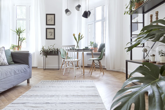 Stylish and modern open space with dining and living room with sofa and family table. Bright and sunny room with plants and brown wooden parquet.