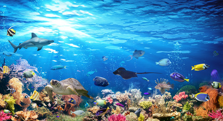 Fototapeten Riff Underwater Scene With Coral Reef And Exotic Fishes