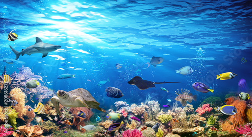 Wall mural Underwater Scene With Coral Reef And Exotic Fishes