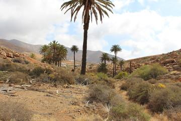 Fuerteventura Barranco de las Penitas
