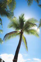 Palmtree with sunglare