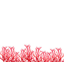 red coral water colour