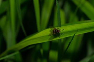Fliege sitzt auf einem Blatt