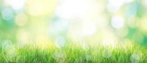 Gras im Frühling Fotoväggar
