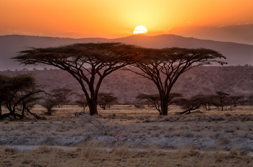 Twin Acacia Trees with sun setting behind the mountains in background in Samburu, Kenya