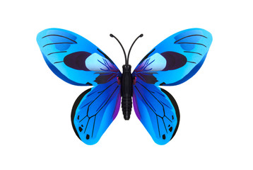 Beautiful blue colored  butterfly