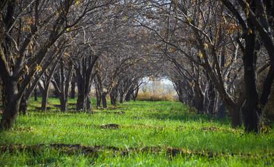 Autumn Grass Land
