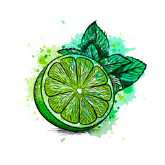 Fresh lime with leaves and mint
