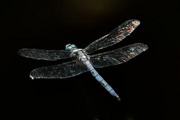 Dragonfly flying against a black backdrop
