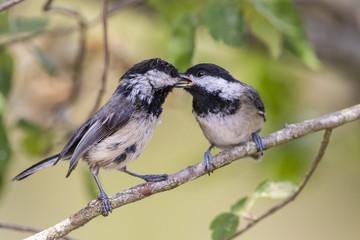 Two cute little birds on a branch