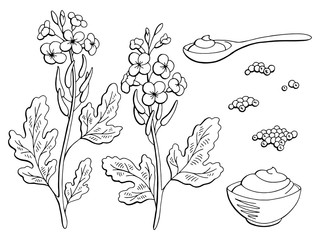 Mustard plant graphic black white isolated sketch set illustration vector
