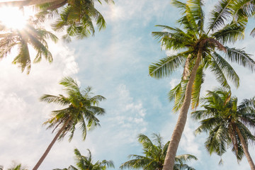 Coconut palm tree with blue sky cloudy on beach in summer. Vintage tone.