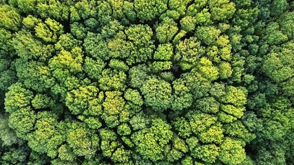 Aerial top view of green trees forest as natur background