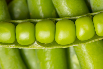green pea close up - macro photo