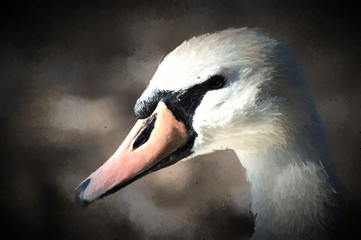 A beautiful white swan captured closeup and in profile.