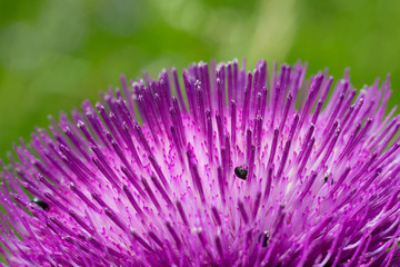 Small insect on meadow flower blossom, macro photo