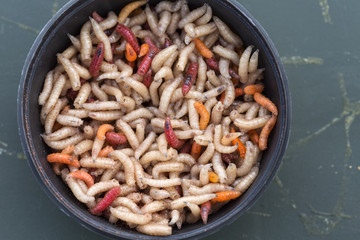 Round box filled with maggots worms
