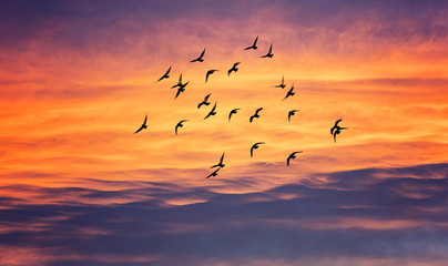 Tuinposter Vogel birds flying into sunset sky
