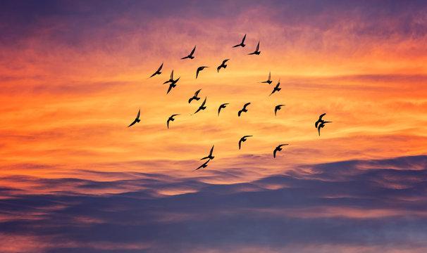 birds flying into sunset sky