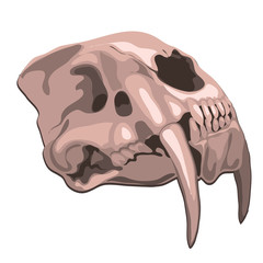 Skull tiger isolated on white background. Vector cartoon close-up illustration.