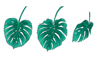 Exotic tropical Monstera leaves. Isolated vector illustration set.