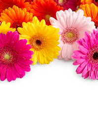 Foto op Canvas Gerbera Beautiful gerbera flowers isolated on white background