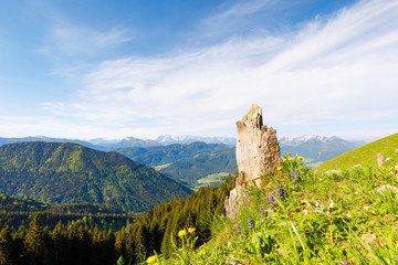 tree stub with alpine flowers and beautiful view of bavarian alps