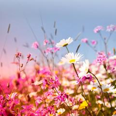 Champ de fleurs roses et blanches