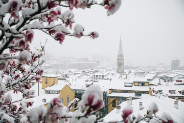 Town view and blooming tree in winter