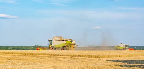 Two combines in the field to gather the harvest of grain crops, rye, wheat