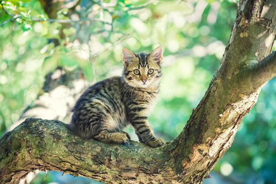 Cute little kitten sitting in a branch of a tree in a garden