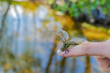 Dragonfly sitting on a woman's finger against a background of water with enchanting reflections of trees