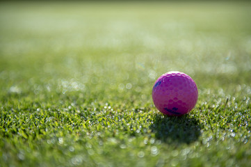 Pink Golfball on lawn