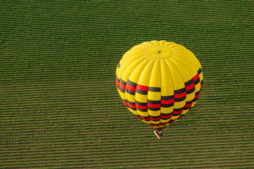 Poster Balloon Hot Air Balloon Drifts Over Napa Valley Vineyards