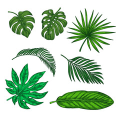 Tropical green palm leaves set, vector sketch illustration. Hand drawn tropic nature and floral design elements