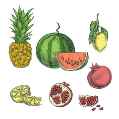 Tropical colorful fruit sketch vector illustration. Pineapple, lemon, watermelon, pomegranate hand drawn design elements