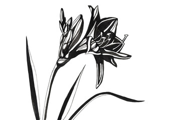 Awesome lily flowers.Hand drawn 